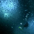 diving_01