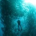 diving_09